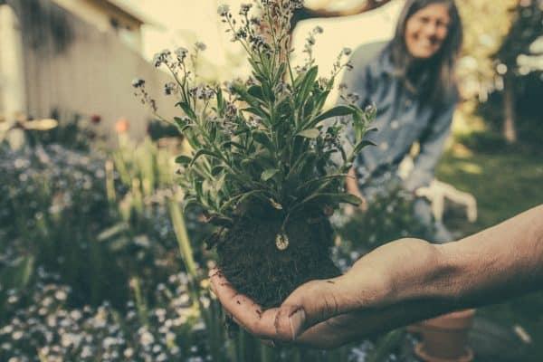 Comment mieux vous occuper de votre jardin?