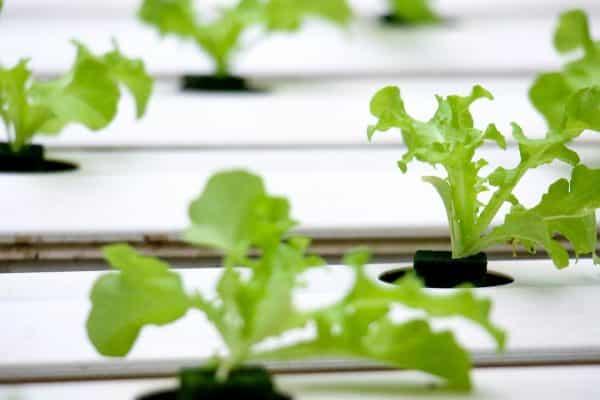 Comment jardinier sans avoir de jardin?